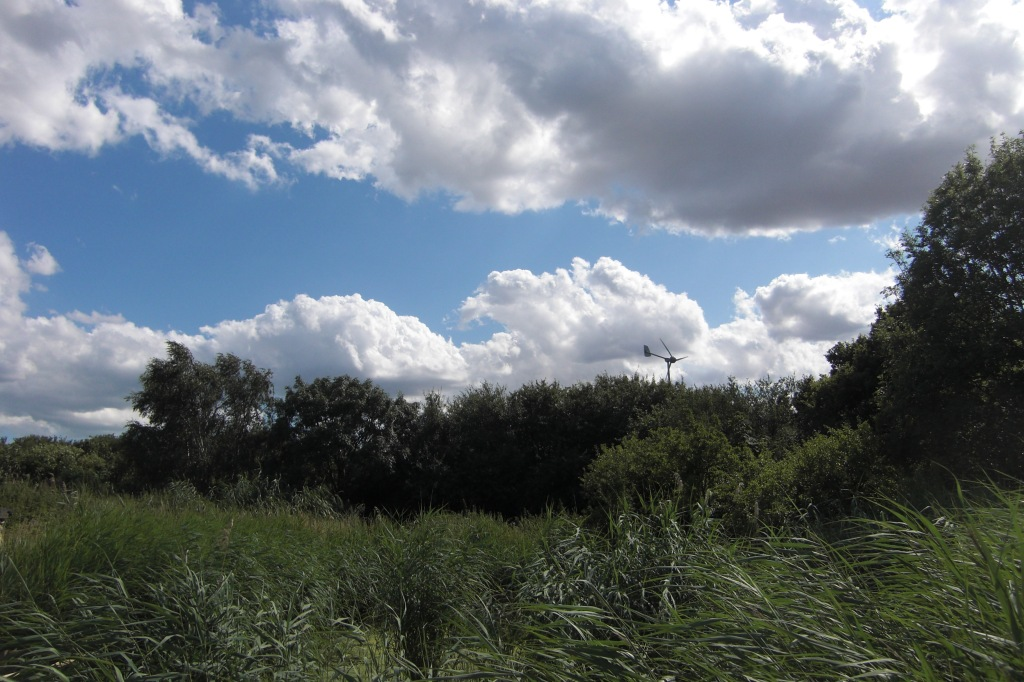 The reed bed and wind turbine